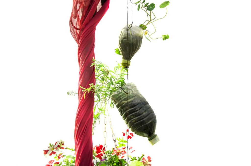 Grow plants in plastic bottles